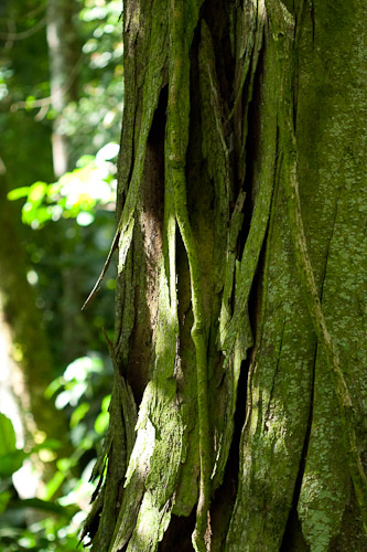Closeup photo of tree bark in a forest.